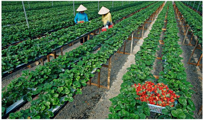 Rất ít startup Việt chọn nông nghiệp, thực phẩm phát triển