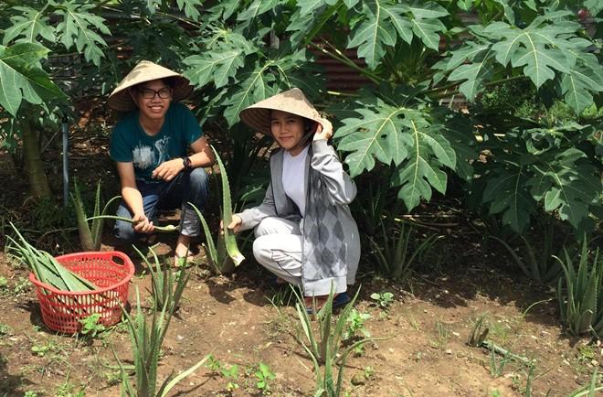 Nguyễn Thị Huệ và bạn đang thu hoạch nha đam