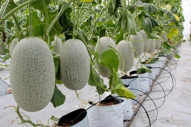 Nông nghiệp có nhiều tiềm năng phát triển