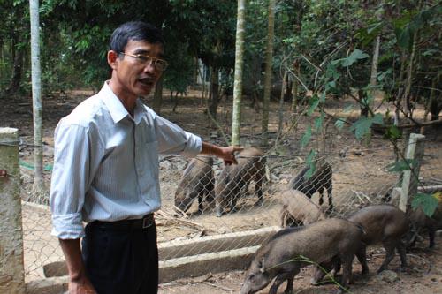 """Ông Trần Phúc Đạt theo đuổi thương hiệu """"thịt lợn rừng sạch"""""""