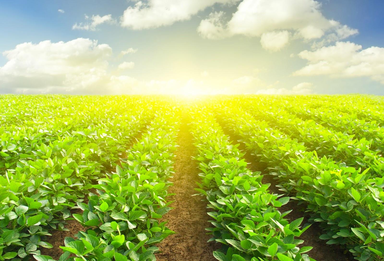 Các dự án nông nghiệp chiếm số đông trong cuộc thi