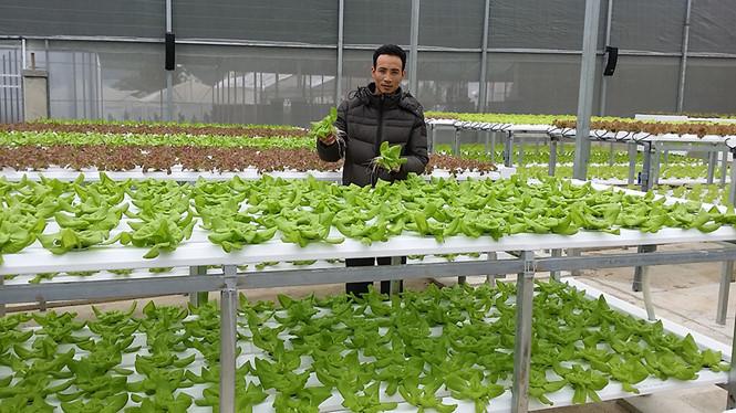 Anh Nguyễn Văn Dương trong vườn rau thủy canh của mình