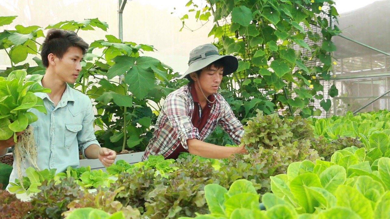 Anh Chính hướng dẫn nhân viên tại vườn rau sạch