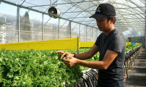 Chàng đạo diễn bên trang trại rau của mình