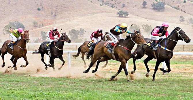 Hợp pháp hóa kinh doanh đặt cược đua ngựa, đua chó và bóng