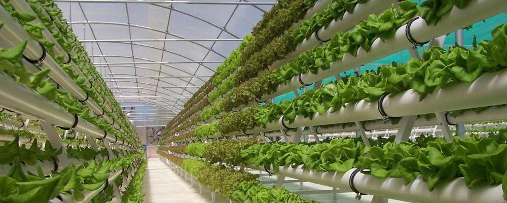 Hình ảnh nông nghiệp công nghệ cao
