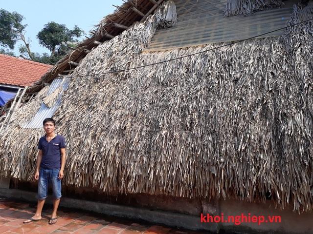 Toàn bộ số phôi giống sẽ được bảo quản trong căn nhà bằng lá cọ
