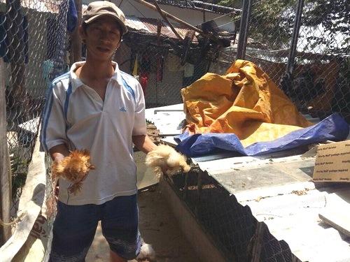 Anh Nguyễn Minh Hùng giới thiệu giống gà cảnh