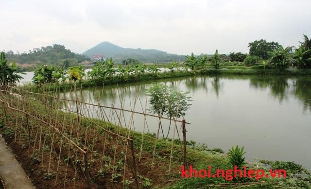 Mô hình Vườn Ao Chuồng khép kín ở nông thôn