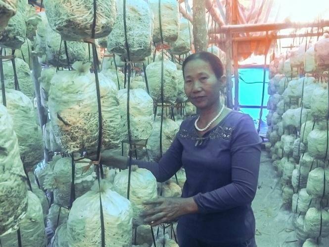 Bà Yến giới thiệu về trại nấm