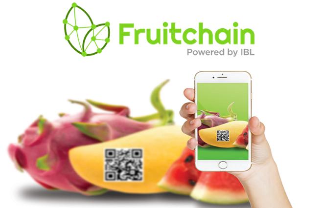 Dự án Fruitchain đang được thử nghiệm tại tỉnh Đòng Tháp, Việt Nam, hướng đến minh bạch hóa thông tin trong chuỗi giá trị sản phẩm. Ảnh: IBL