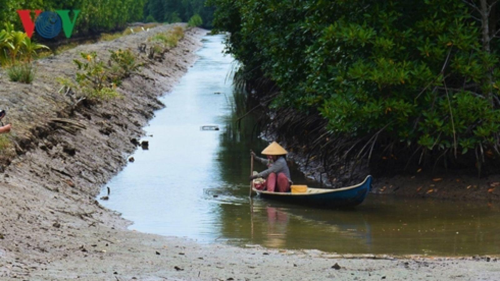 Mô hình nuôi tôm sinh thái dưới tán rừng được công nhận các chuẩn quốc tế, giúp nâng cao giá trị con tôm.