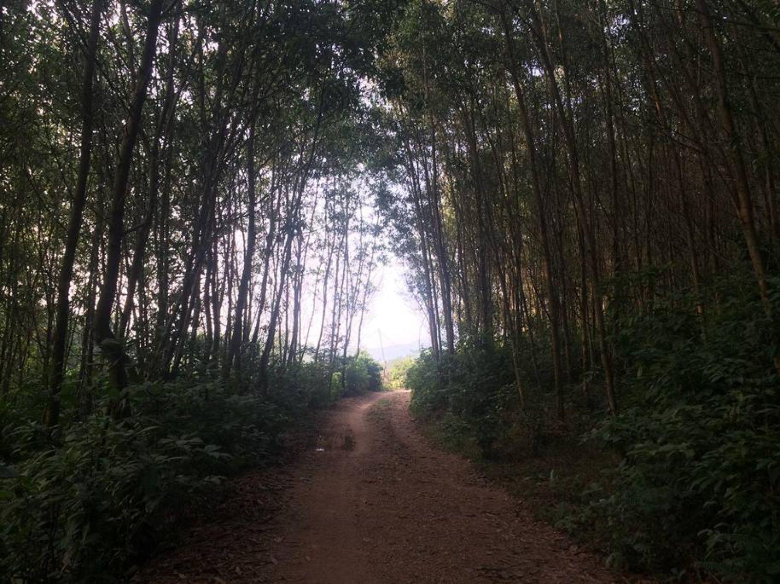 """Còn đường """"nguyên liệu"""" được gia đình anh Nguyễn Tuấn Mạnh đầu tư xây dựng lên từ chân đồi đến đỉnh đồi để tiện thu hoạch keo lai. Ảnh: Cảnh Thắng"""