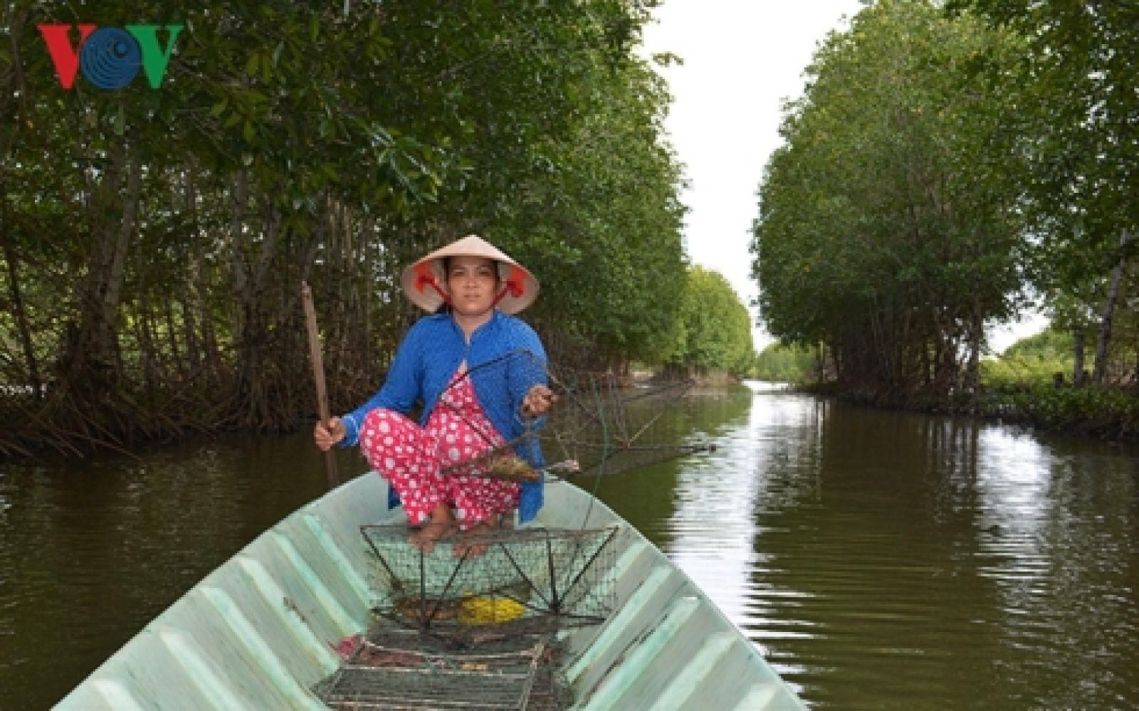 Mô hình nuôi tôm sinh thái dưới tán rừng giúp người dân Cà Mau có nhập ổn định.