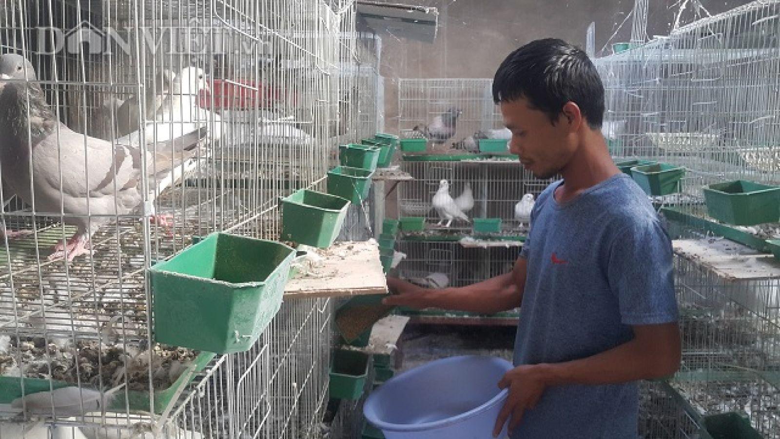 Hiện tại gia đình anh đang có 200 cặp chim bố mẹ, dự định thời gian sắp tới gia đình anh sẽ mở rộng quy mô lên tới hơn 500 cặp bố mẹ.