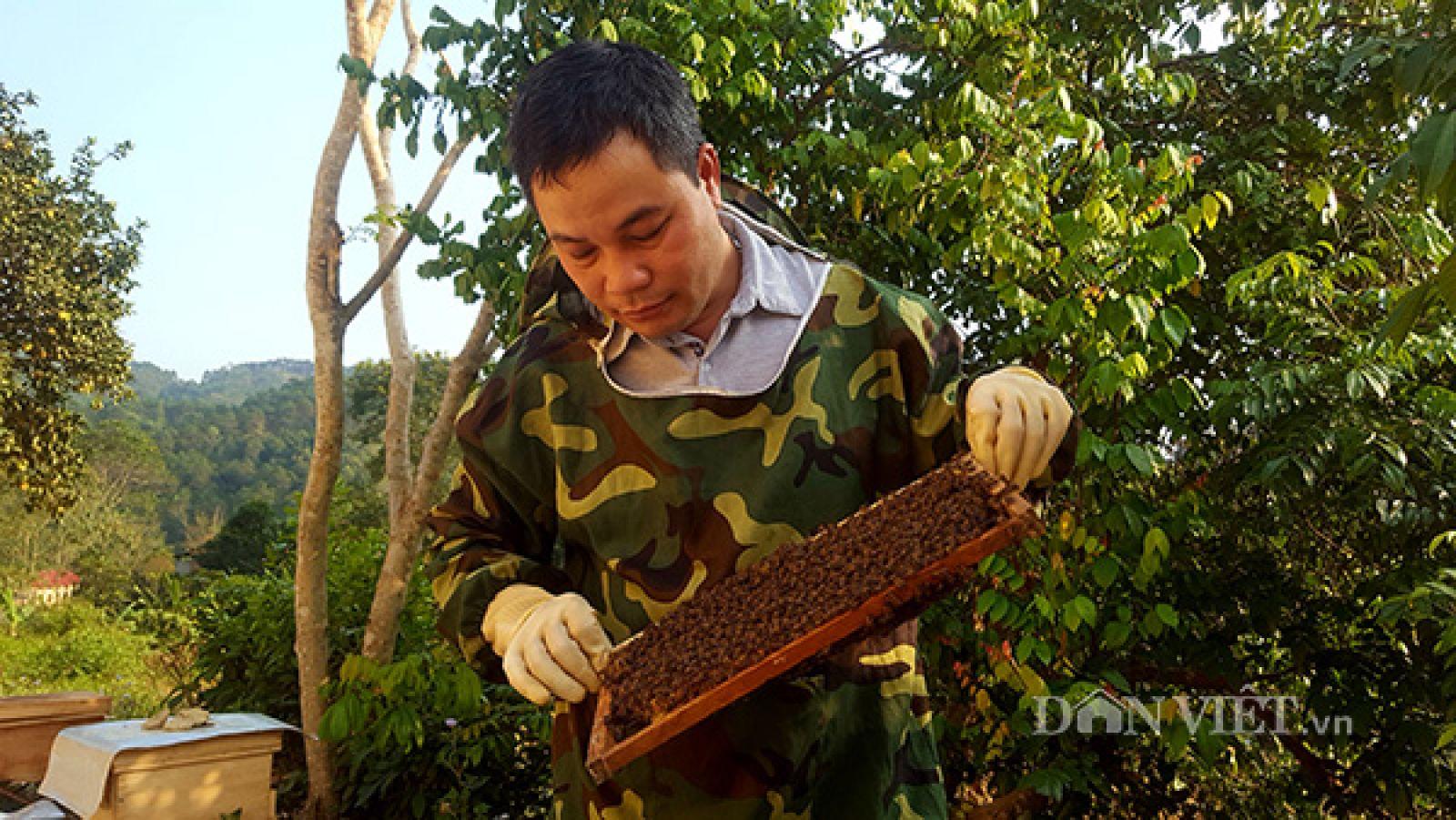 Anh Cương thường xuyên kiểm tra đàn ong tại trại nuôi.
