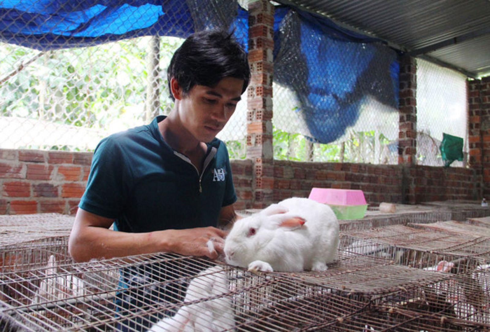 Anh Thành chăm sóc thỏ trong trang trại; Ảnh Mạnh Cường