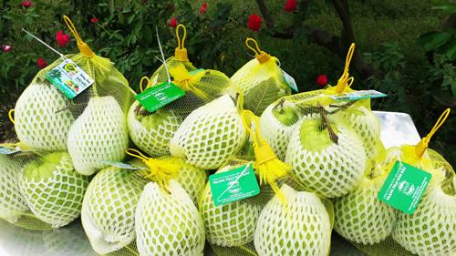 Ổi lê Đảo Bàu ngọt giòn được trồng theo hướng hữu cơ bán cho khách du lịch. Ảnh: Bizmedia