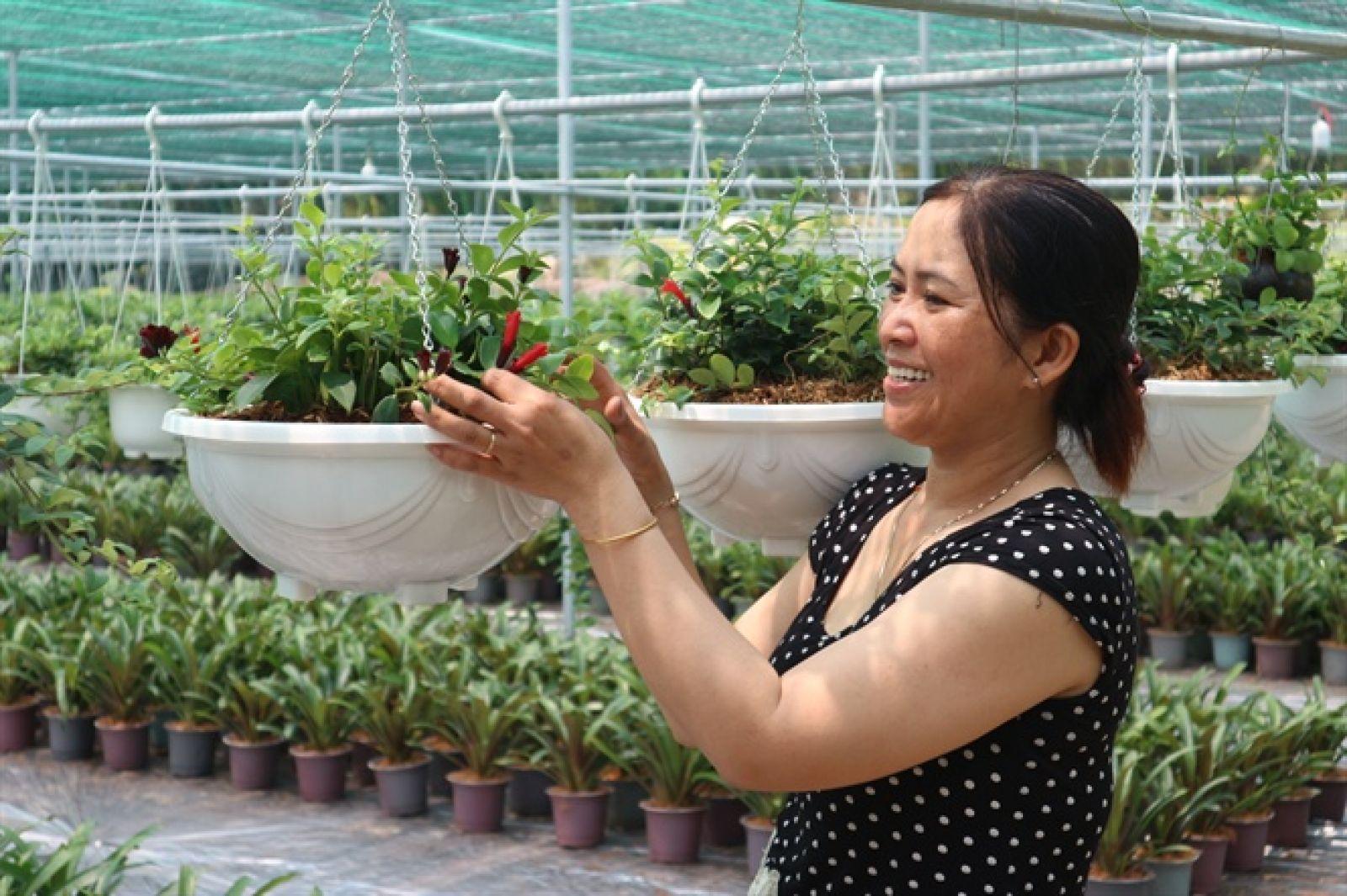 Chị Nguyễn Thị Nga chăm sóc các loại hoa treo (kiểng treo)
