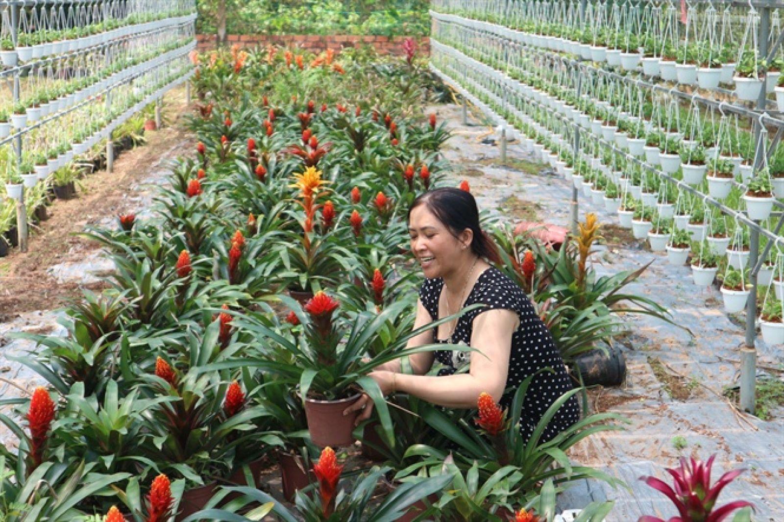 Chị Nga chăm sóc các loại kiểng bông trồng ở tầng dưới đất