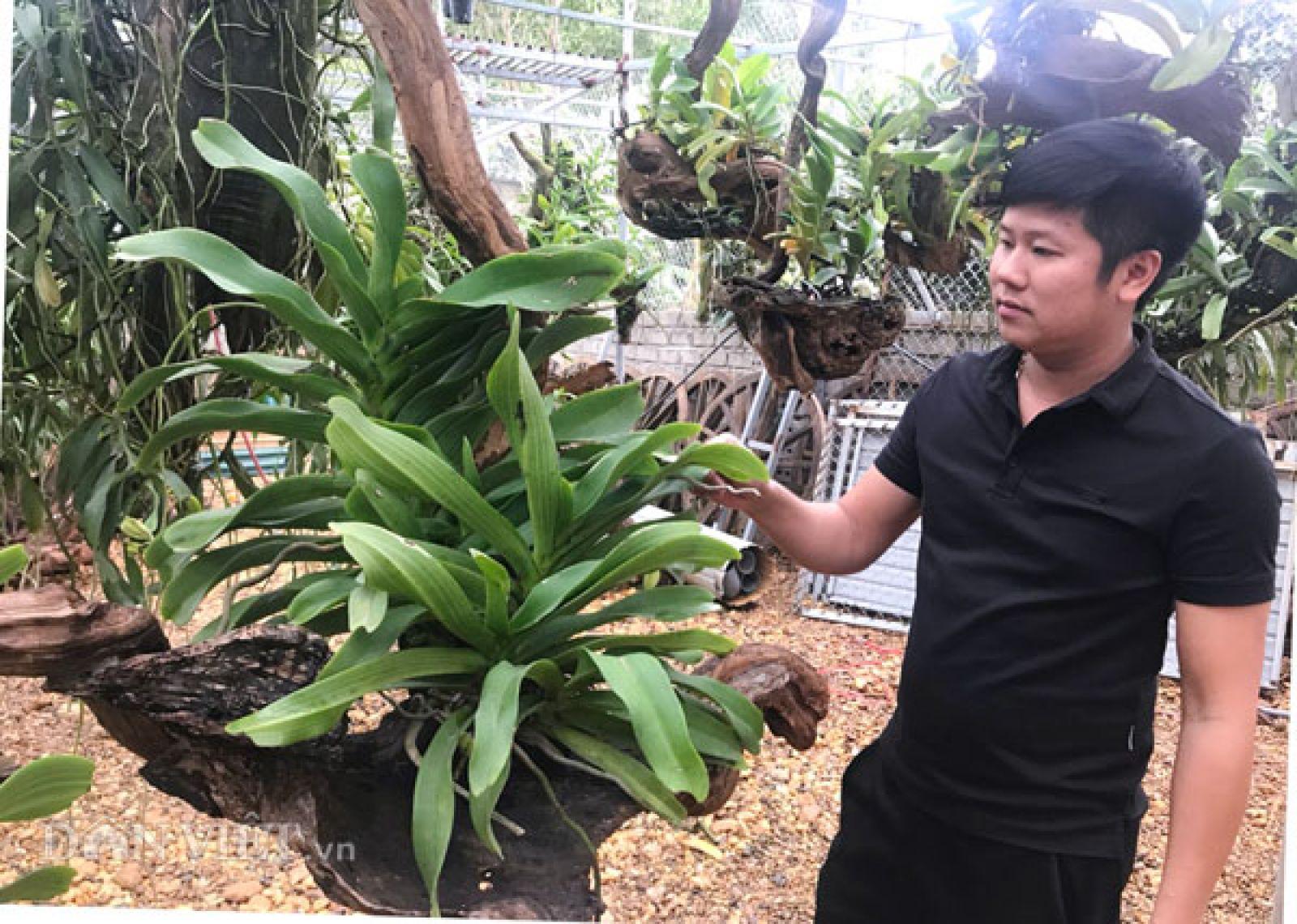 Anh Thắng thường xuyên kiểm tra, phun tưới những nhánh lan rừng trong khu vườn của mình.