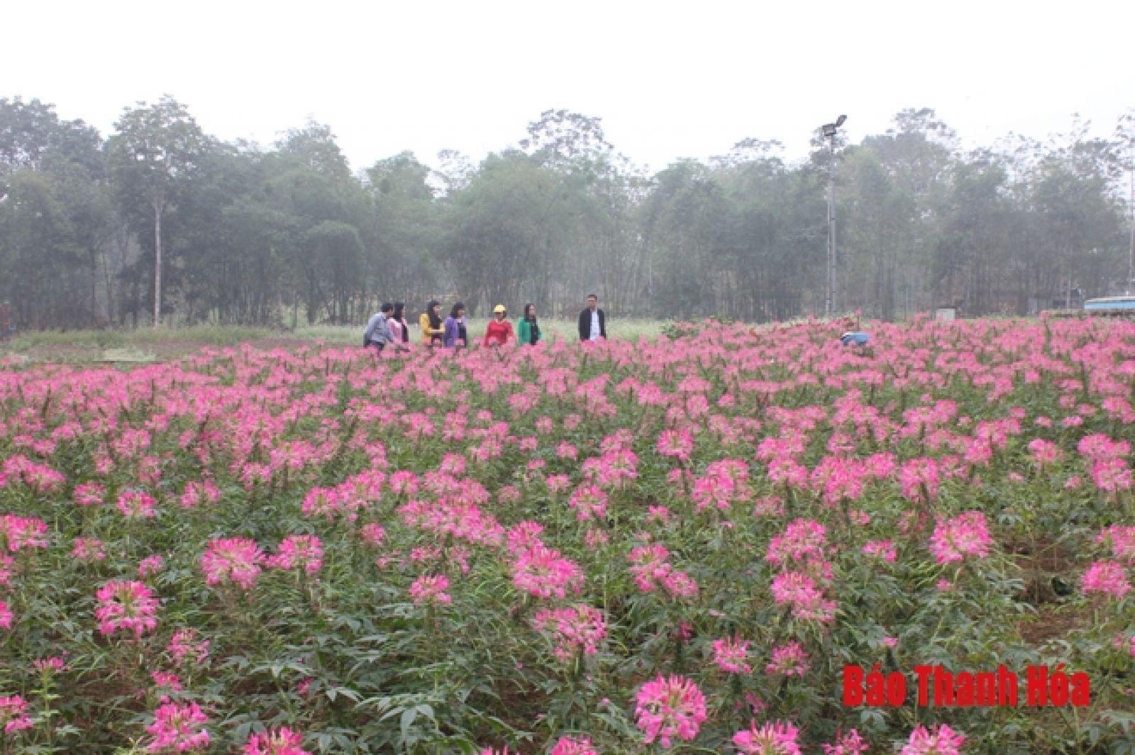 """""""Thung lũng hoa"""" của gia đình chị Phùng Thị Huy."""