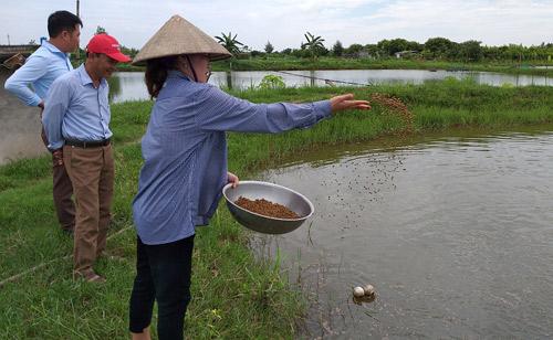 Chị Nguyễn Thị Thủy cho tôm ăn. Ảnh: Khắc Duẩn