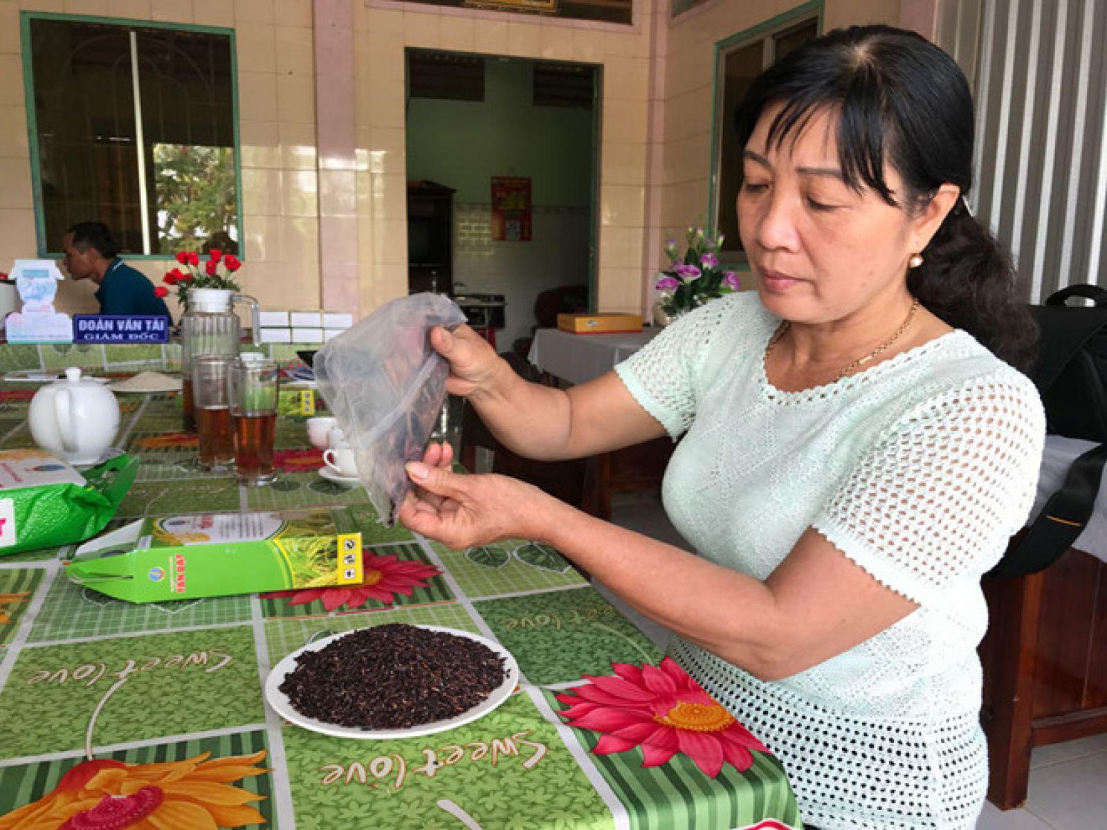 Gạo tím thảo dược được chế biến thành trà để uống