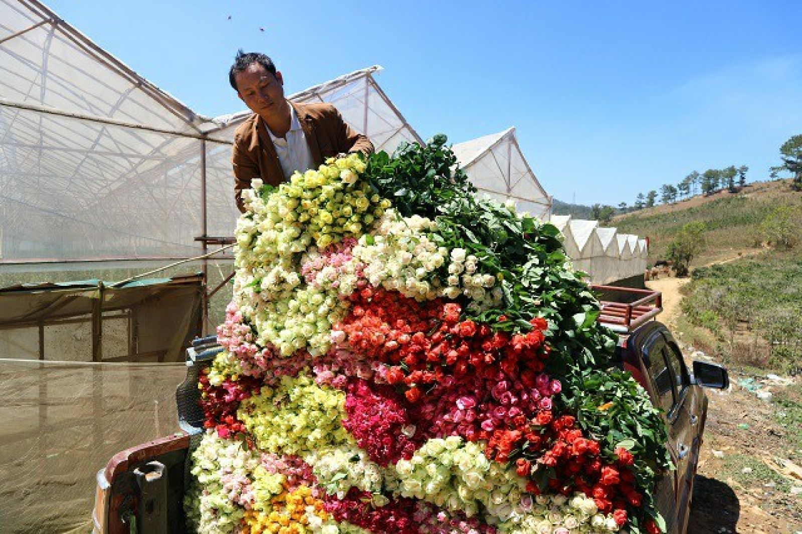 Người dân tại Lạc Dương đã mua được ô tô để đi thăm vườn hoa hồng và vận chuyển hoa về nhà.