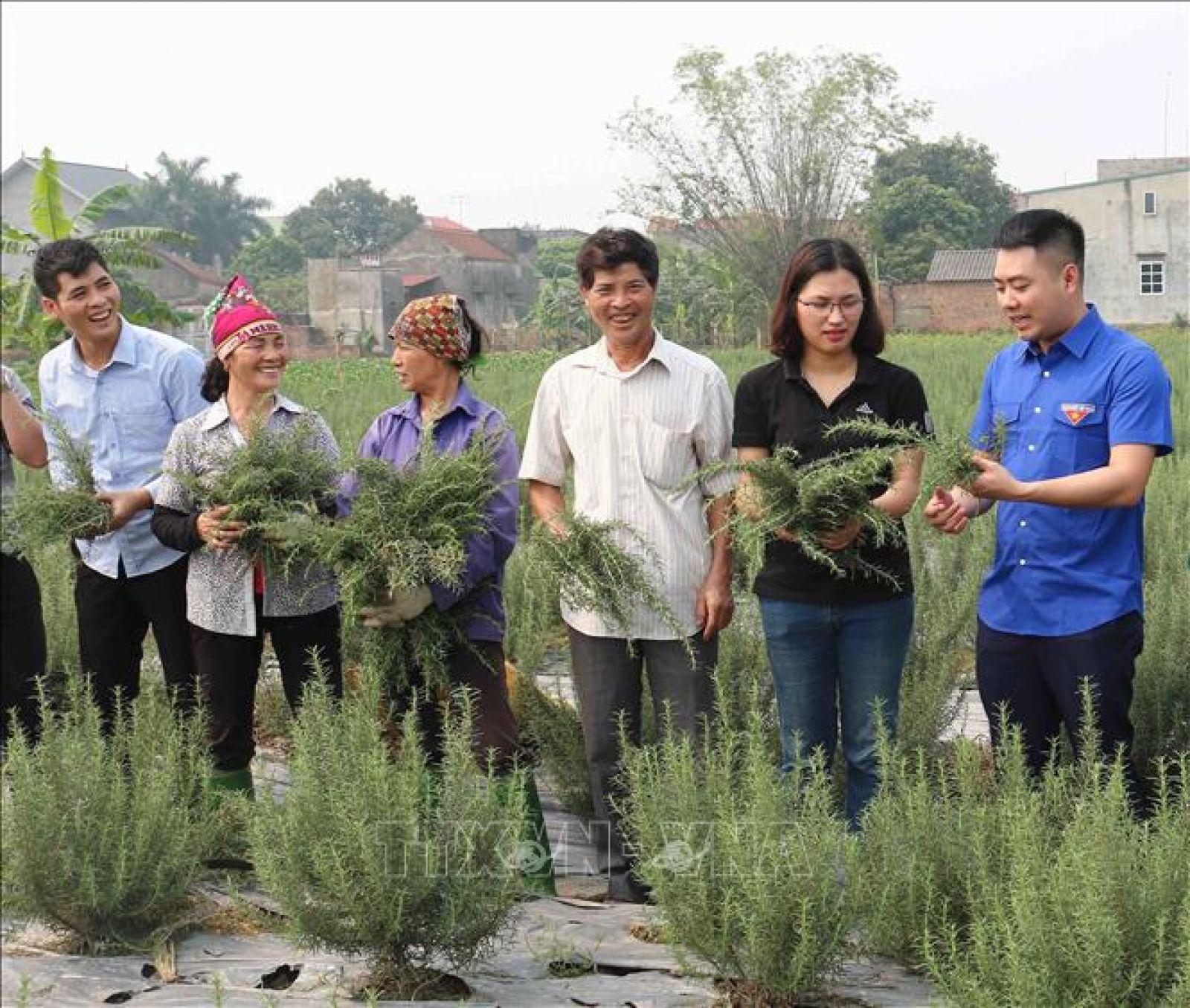 Vũ Thị Thu đang giới thiệu với thanh niên về các cây thảo dược dùng để chiết xuất ra các sản phẩm. Ảnh: Thái Hùng/TTXVN