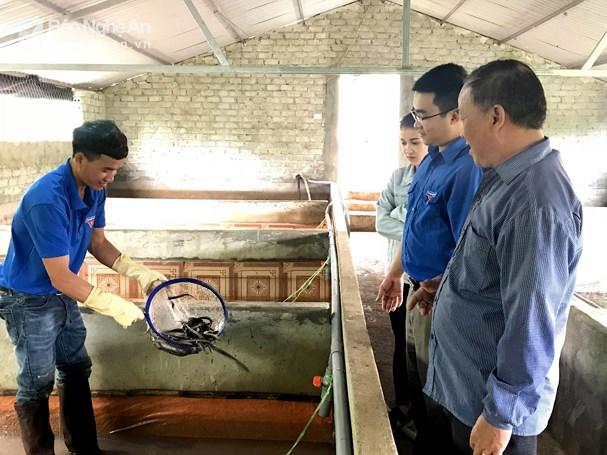 Mô hình lươn của đoàn viên Lê Văn Hưng ở xóm Màn, xã Nghĩa Thọ (Nghĩa Đàn). Ảnh: Minh Thái