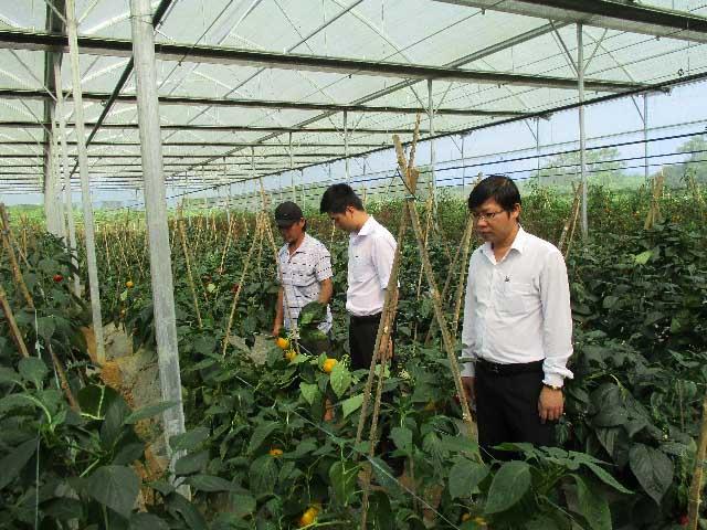 Nhờ trồng rau hữu cơ mà anh Trương Ngọc Sơn có thu nhập khá cao và mỗi năm thu lãi từ 230-250 triệu.