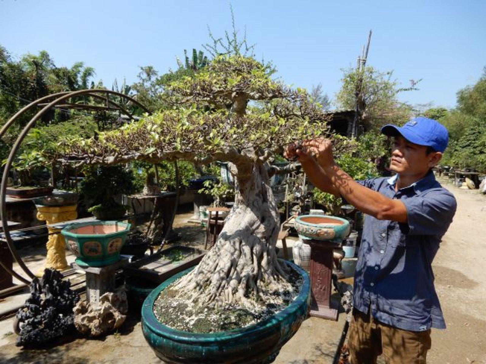 Anh Thuấn đang chăm sóc cây cảnh