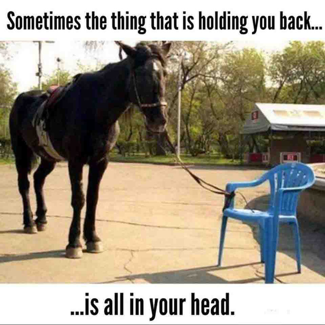 Hình ảnh con ngựa bị buộc vào chiếc ghế và tố chất không thể thiếu của một nhà lãnh đạo thành công - Ảnh 1.