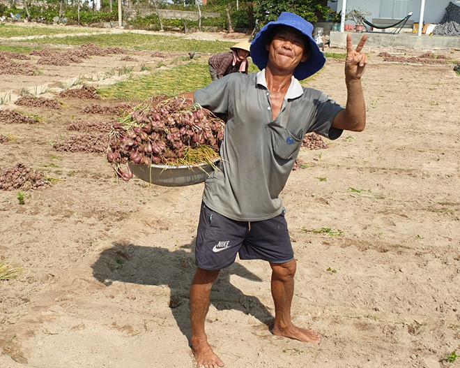 Nông dân trồng hành tím Ninh Thuận có mùa bội thu