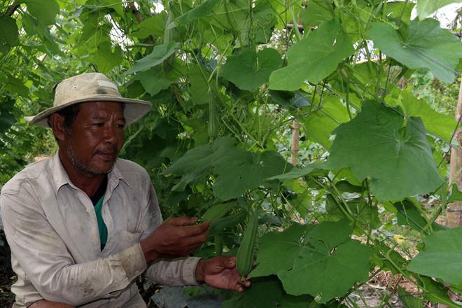 Ông Cao Văn Phòng chăm sóc rau màu /// Ảnh: Anh Phương