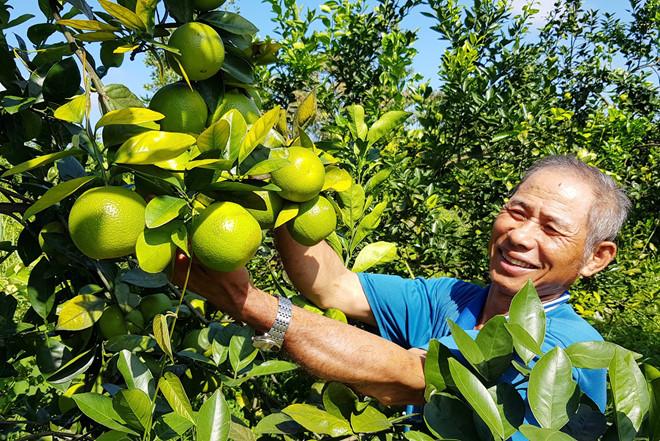 Ông Trần Ngọc Nhơn, người tiên phong trồng cam ở vùng K4 /// Ảnh: Nguyễn Phúc