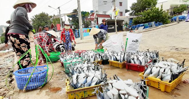 Ngư dân đánh bắt gần bờ ở xã Nhơn Lý trúng đậm cá cơm, cá lồ ồ /// ẢNH: MINH LÊ