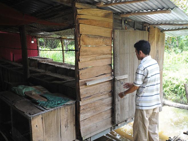 """Ông Khánh tận dụng xây """"nhà sàn"""" trên mặt ao cá để nuôi chồn /// DUY TÂN"""