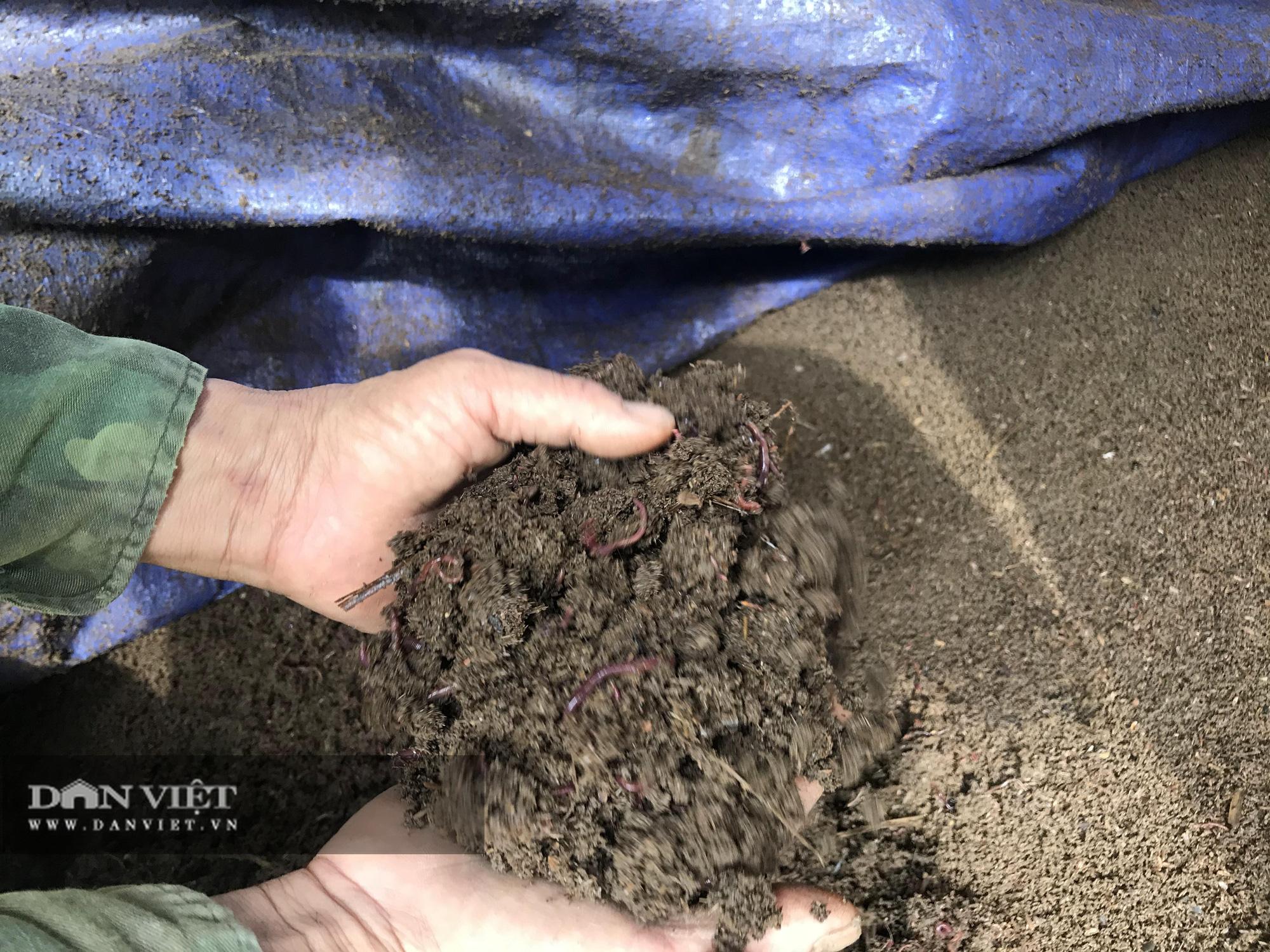 Bắc Kạn: Có mảnh đất trồng đủ thứ, nuôi loài giun lạ kết hợp bán hàng mà lời vài trăm triệu mỗi năm - Ảnh 5.