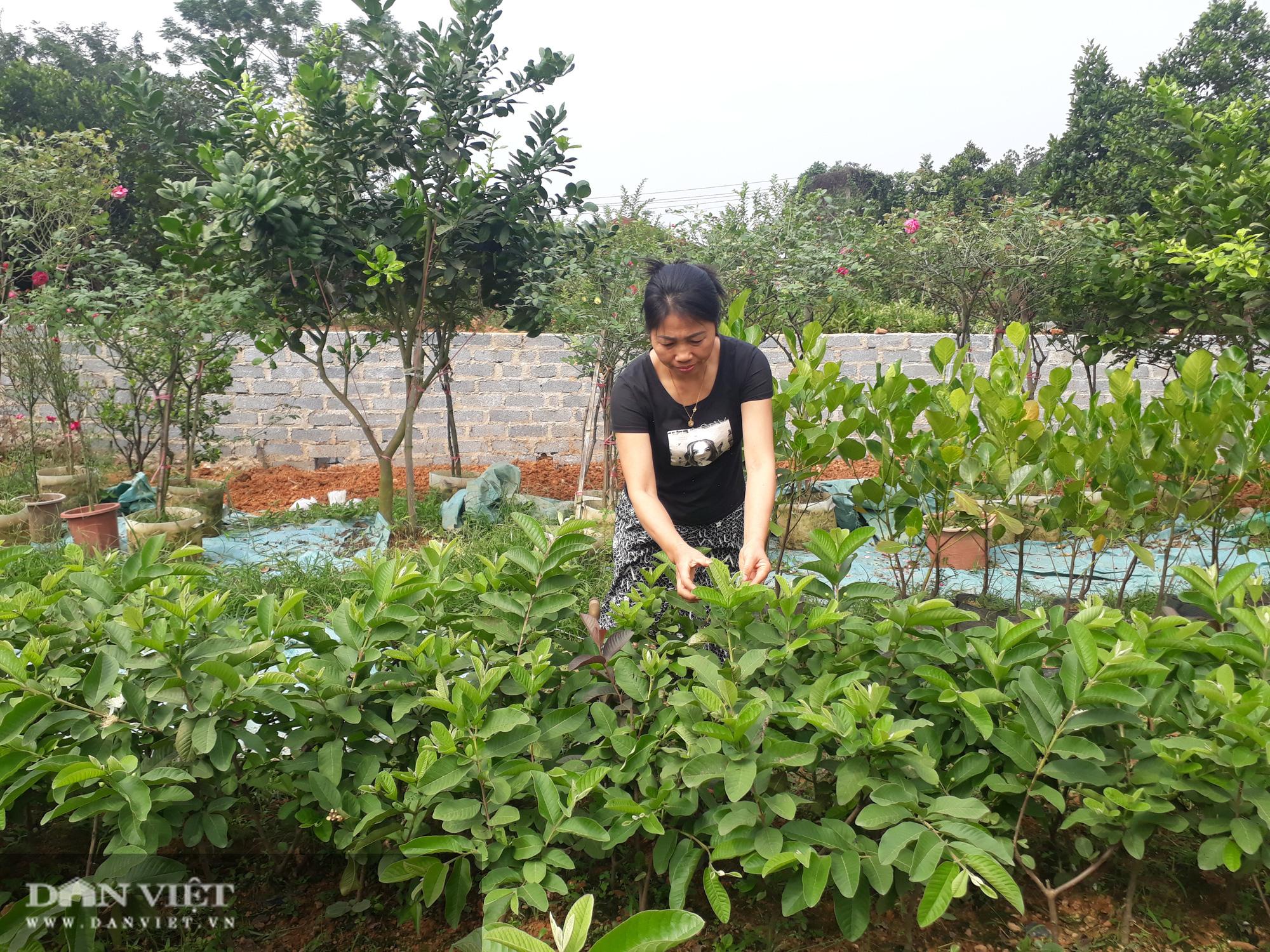 Trồng cây ra quả ngọt quanh năm, vợ chồng anh nông dân Thái Nguyên thu hàng trăm triệu đồng mỗi năm - Ảnh 6.