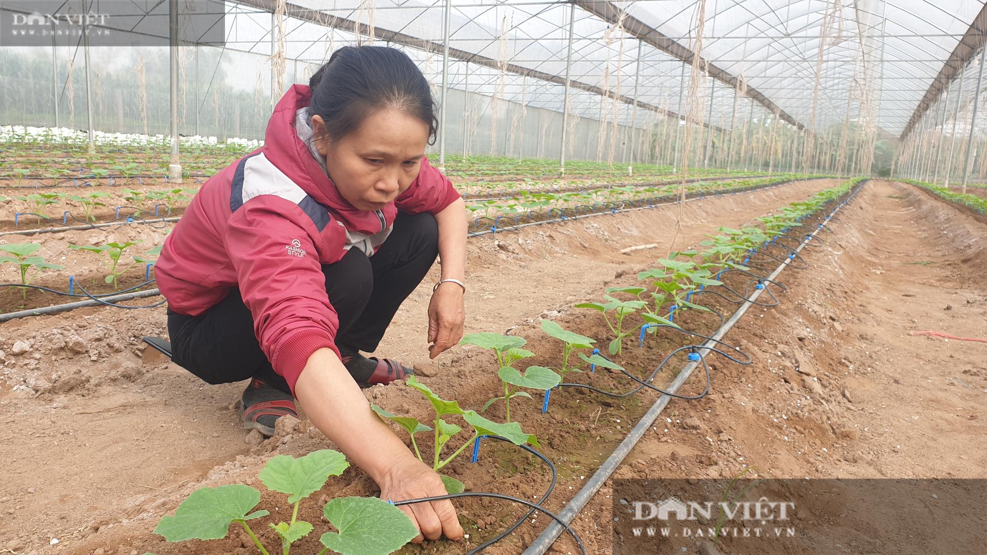Thái Bình: Đam mê trồng dưa công nghệ cao, U50 bỏ túi hơn nửa tỷ đồng/năm - Ảnh 5.