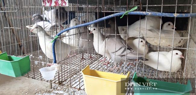 Hà Nội: Nuôi loài chim đẻ sòn sòn, mỗi ngày bán 3.000 con, một nông dân thu lãi 1 tỷ đồng/năm - Ảnh 2.