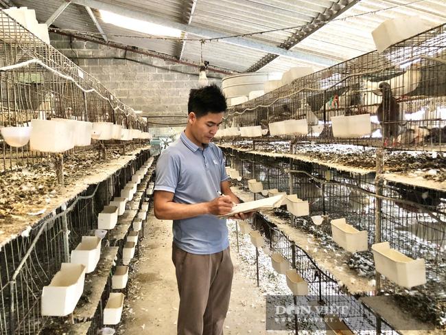 Hà Nội: Nuôi loài chim đẻ sòn sòn, mỗi ngày bán 3.000 con, một nông dân thu lãi 1 tỷ đồng/năm - Ảnh 4.