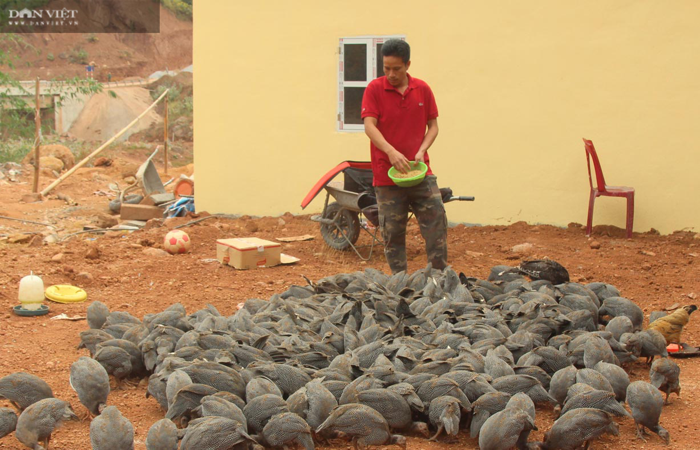 Lai Châu: Nuôi 500 con, nhìn xa tưởng là chim, lại gần hóa ra gà, anh nông dân thu vài trăm triệu mỗi năm - Ảnh 1.