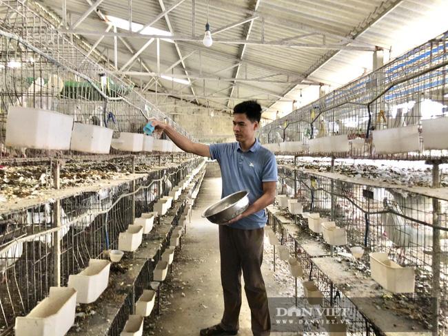 Hà Nội: Nuôi loài chim đẻ sòn sòn, mỗi ngày bán 3.000 con, một nông dân thu lãi 1 tỷ đồng/năm - Ảnh 7.