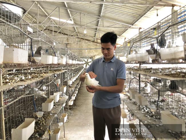 Hà Nội: Nuôi loài chim đẻ sòn sòn, mỗi ngày bán 3.000 con, một nông dân thu lãi 1 tỷ đồng/năm - Ảnh 1.