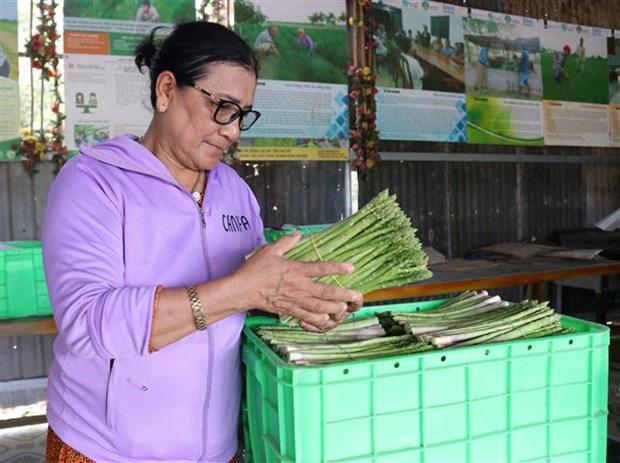 Ninh Thuận: Nông dân này trồng thứ rau gì mà ăn tươi bổ dưỡng, làm trà uống hay, mỗi tháng đút túi 40 triệu? - Ảnh 1.
