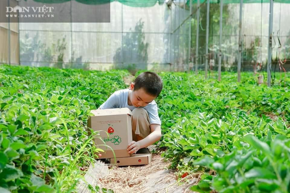 Kỹ sư 8X đánh liều trồng giống dâu lạ, làm 2 vụ đã thu hồi vốn đầu tư ban đầu - Ảnh 9.